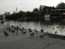 Aard, vogels, op Hongarije Stock Foto