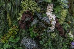 Aardachtergrond en textuur of behang Stock Foto