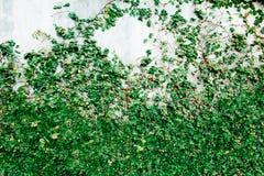 Aardachtergrond en textuur groen blad Stock Afbeelding