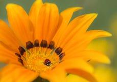 Aardachtergrond, gele bloem stock afbeelding