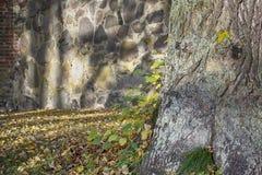 Aardachtergrond met een van de boomboomstam en herfst bladeren, stock afbeelding