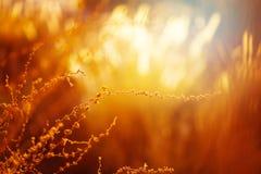 Aardachtergrond met Gouden Gras Royalty-vrije Stock Afbeelding
