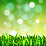 Aardachtergrond met gras en bokeh Royalty-vrije Stock Afbeeldingen