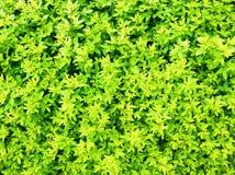 Aardachtergrond met groene bladeren Royalty-vrije Stock Fotografie