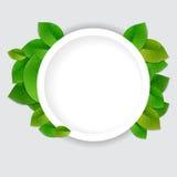 Aardachtergrond met groene verse bladeren Stock Fotografie