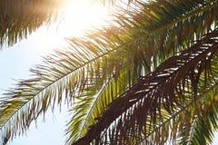 Aardachtergrond, palmbladenbomen tegen blauw hemelbehang, de zomervakantie, het concept van de vakantieprentbriefkaar Royalty-vrije Stock Foto