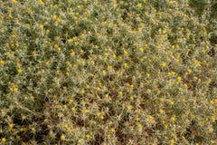 Aardachtergrond van doorninstallaties met gele bloemen Stock Foto's