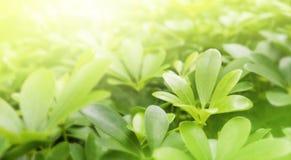 Aardachtergrond van groene bladeren met zonlicht in de tuin Royalty-vrije Stock Fotografie