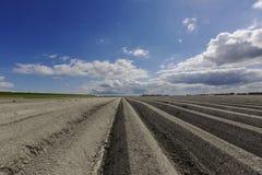 Aardapel akker, potatisfält royaltyfri bild