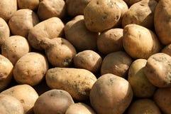 Aardappel royalty-vrije stock foto's