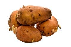 Aardappel Royalty-vrije Stock Afbeeldingen