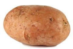Aardappel die op witte achtergrond wordt geïsoleerd stock afbeeldingen