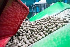 Aardappel het sorteren, verwerking en verpakking bij fabriek stock afbeelding