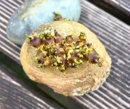Aardappel met spruiten royalty-vrije stock foto