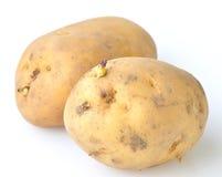 Aardappel met spruiten Stock Fotografie