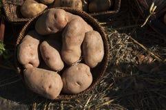 Aardappel in openlucht Royalty-vrije Stock Fotografie