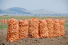 Aardappel in zak royalty-vrije stock afbeeldingen