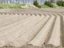Aardappelgebied in een vroeg stadium Royalty-vrije Stock Afbeeldingen