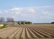 Aardappelgebied in een vroeg stadium Royalty-vrije Stock Foto's