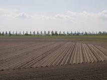 Aardappelgebied in een vroeg stadium Stock Fotografie