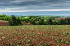 Aardappelgebied in landelijke Prins Edward Island Royalty-vrije Stock Foto