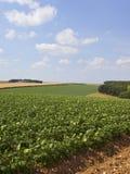 Aardappelgebieden in een landschap van de lapwerkzomer stock afbeelding