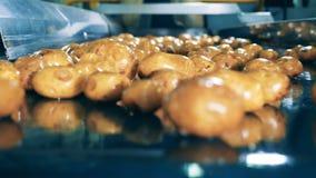 Aardappelknollen die zich langs de riem in dichte omhooggaand bewegen stock footage