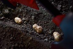 Aardappelknollen en landbouwermachine in voren op een aardappelgebied royalty-vrije stock foto
