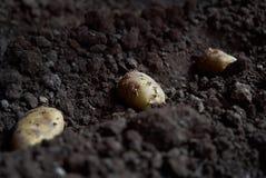 Aardappelknollen en landbouwermachine in voren op een aardappelgebied stock afbeelding