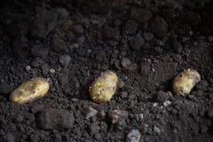 Aardappelknollen en landbouwermachine in voren op een aardappelgebied royalty-vrije stock afbeeldingen