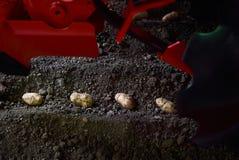 Aardappelknollen en landbouwermachine in voren op een aardappelgebied royalty-vrije stock foto's