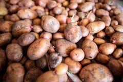 Aardappeloogst in de kelder als achtergrond stock foto's