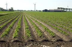 Aardappelranden, boerderij en windmolens, Nederland Stock Fotografie