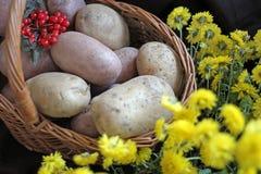 Aardappels en viburnum in een mand Thanksgiving day oogst stock foto's