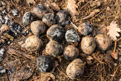 Aardappels in het hout worden gekookt dat Aardappelen in de schil Stock Fotografie