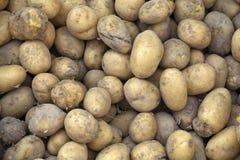 Aardappels op een opslag Stock Foto's