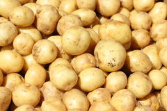 Aardappelsachtergrond Stock Foto's