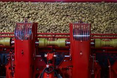 Aardappelsorteermachine, close-up Landbouw comcept sorting stock foto