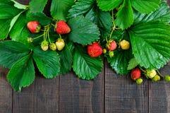 Aardbei en groene bladeren op een donkere houten raad De achtergrond van het voedsel Stock Afbeeldingen