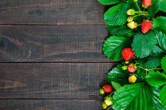Aardbei en groene bladeren op een donkere houten raad De achtergrond van het voedsel Royalty-vrije Stock Foto