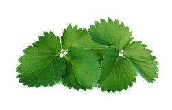 Aardbei groen die verlof op wit wordt geïsoleerd Stock Foto's