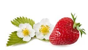aardbei met bloemen Royalty-vrije Stock Foto's