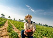Aardbei oogstende mens met een mand van aardbeien Royalty-vrije Stock Fotografie