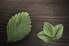 aardbeibladeren op houten achtergrond Stock Afbeelding