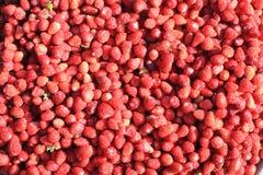 Aardbeien. Royalty-vrije Stock Fotografie