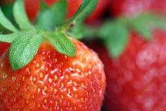 Aardbeien. royalty-vrije stock foto