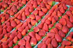 Aardbeien bij een markt van landbouwers stock afbeelding