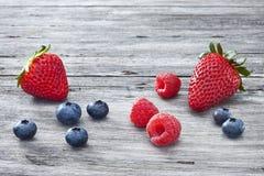 Aardbeien, Bosbes, Frambozen en Blackberry Royalty-vrije Stock Foto's