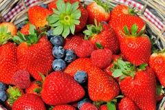 Aardbeien, bosbessen, frambozenmengeling Royalty-vrije Stock Foto's
