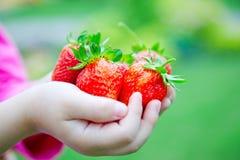 Aardbeien in de handen Stock Foto's